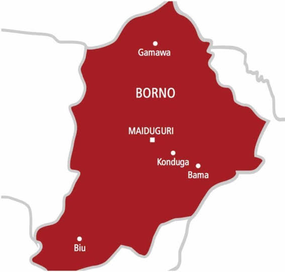 Cholera: Borno Govt confirms 43 deaths, 559 suspected cases